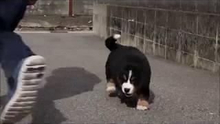 ビジュの仔犬③ thumbnail