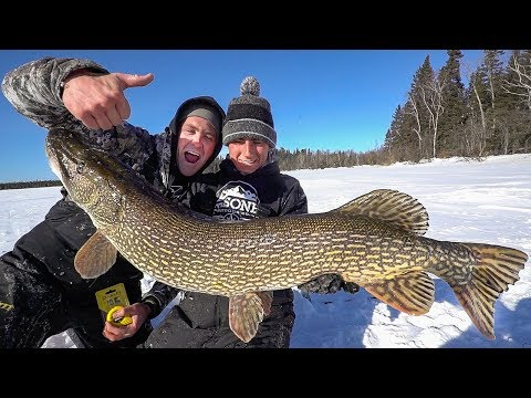 MASSIVE 46 Inch Pike Ice Fishing!!!