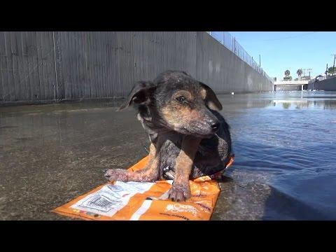 Как люди спасают животных, которые попали в беду