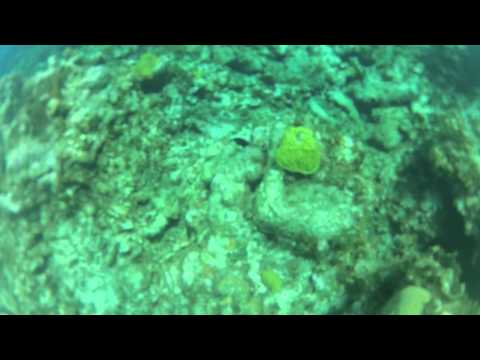 (PART 2) Shore diving in the Cayman Islands