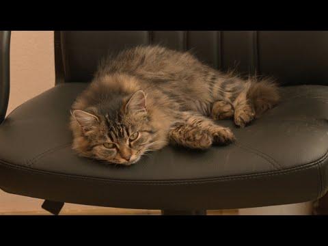 Телеканал Z: Середовище Z - Коти: Частина №1 - Випуск 79 - 09.12.2020