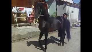 Kuda Menari latihan harian