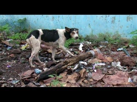 HSI Fights for Animals Around the World