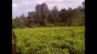 Plots of Land for SAle in Tigoni Limuru