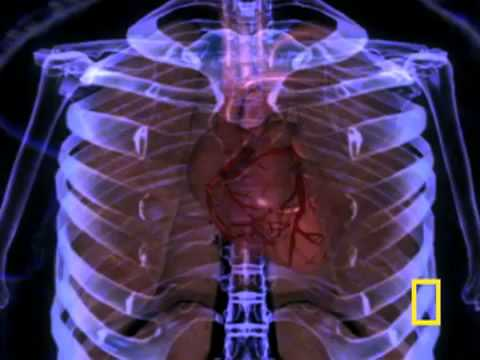 03 The human body - VNPT
