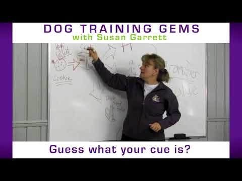 Transfer of Value in Your Dog Training
