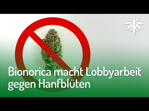 Bionorica macht Lobbyarbeit gegen Hanfblüten | DHV-News #161