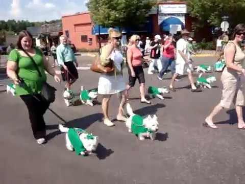 West Highland White Terriers Parade :-)