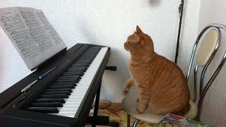 Уроки музыки! Класс!