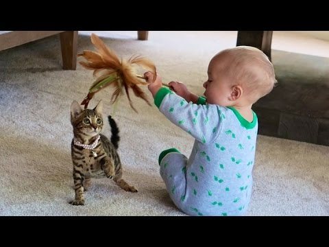 BABY AND KITTEN PLAYING!