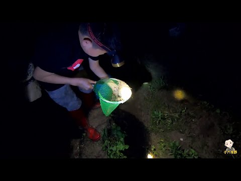 夜晚的田野很熱鬧,小六偷溜出來捉黃鱔,一夾一個準技術槓槓的