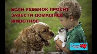Если ребенок просит завести домашнее животное #домашниепитомцы / Видео