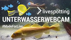 Unterwasser-Webcam bietet Live-Streaming für Gross-Aquarien und Tauchbecken