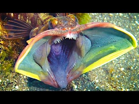 10 Animales extraños e increíbles del fondo del mar!