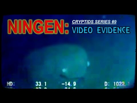 NINGEN: video evidence