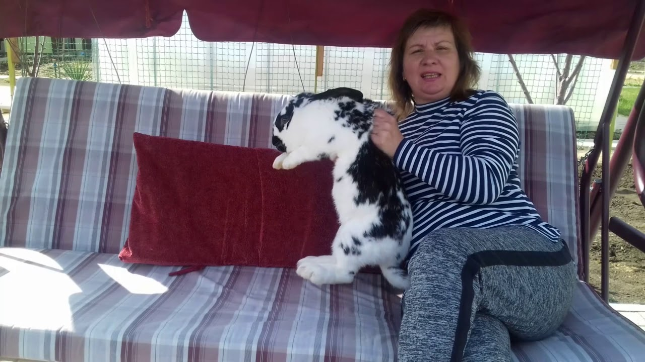 Породы кроликов на мясо: что лучше разводить племенных или помесь?!