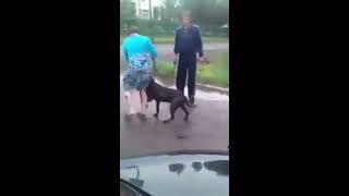 Нападение собаки, жесть