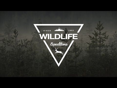 How To Design A Wildlife Triangle Logo In Photoshop