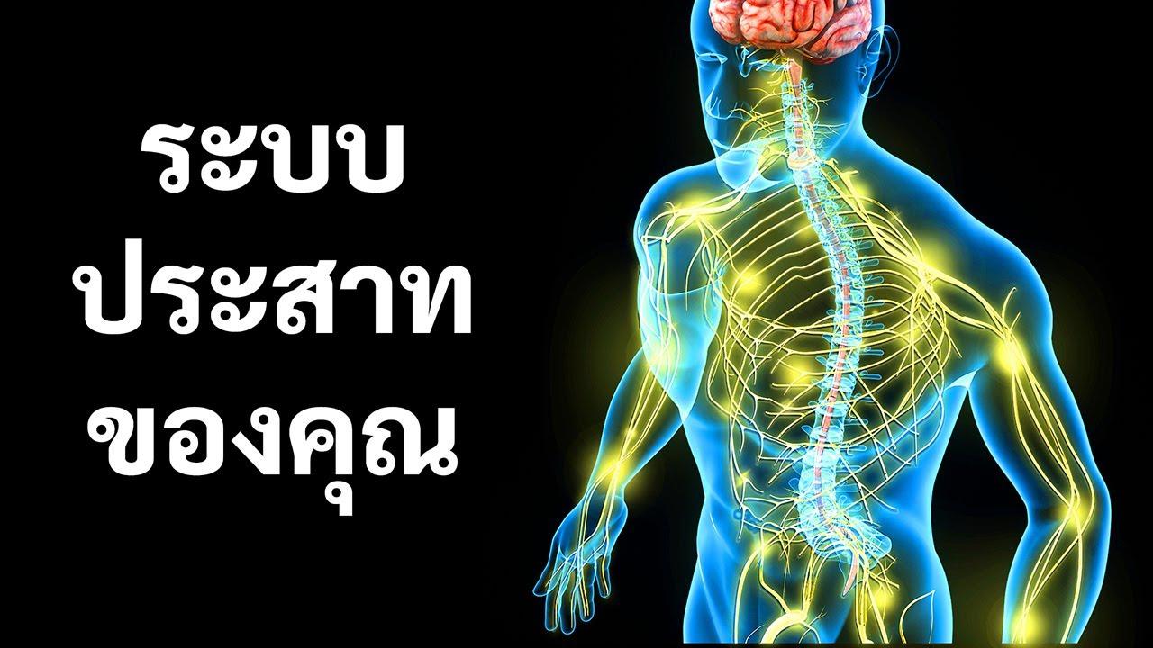เรื่องราวเกี่ยวกับระบบประสาทของคุณ