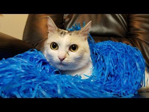 はたきと戦う猫【ネコ吉LIFE part2】Cute Cat Videos part2