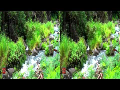 3D Video Stream Hawaii Nature Scene - 3D Video Everyday N°280