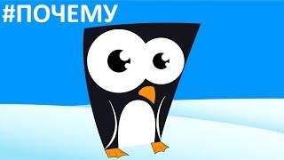 Видео Для Детей - Почему у Пингвинов не Мерзнут Лапы❓❗ Наука и Интересные Факты для Школьников