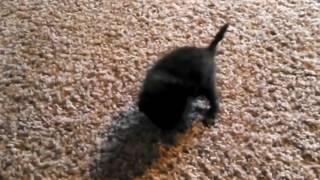Очень прикольное и смешное видео про котят