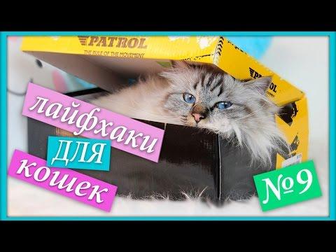 Вопрос: Как устроить комнату для своей кошки?