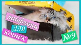 Лайфхаки для кошек и котов, упрости жизнь кота!