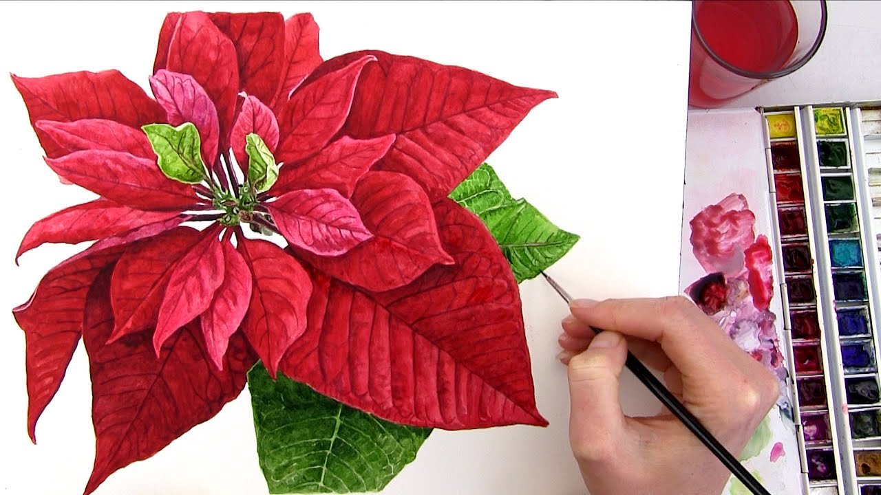 How to paint a realistic Poinsettia for your Christmas card in ...