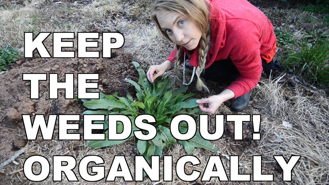 3 Easy Ways to Keep Weeds Out of Your New Garden Bed Organically