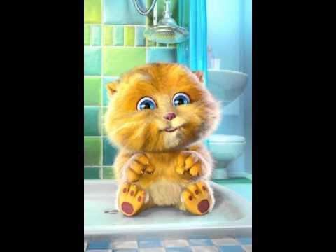 Gattino cicciottellino che canta