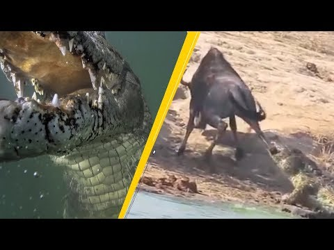 5 Crocodile Attacks Caught On Camera & Spotted In Real Life!