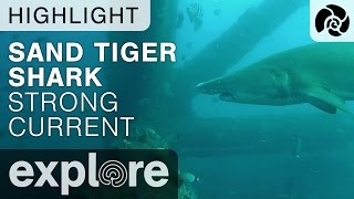 Sand Tiger Shark Swims in Strong Current - Shark Cam - Live Cam Highlight thumbnail