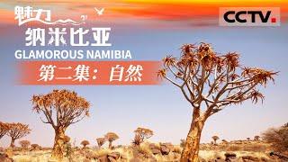 《魅力纳米比亚》第二集 地球上真实存在的疯狂动物园 在纳米比亚开启一场探寻自然之美的惊艳旅途吧!【CCTV纪录】 - YouTube
