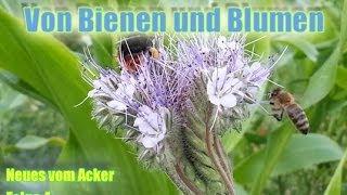 NEUES VOM ACKER Folge 4 - Von Bienen und Blumen Thumbnail