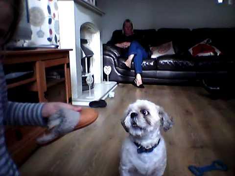 dog-making-funny-noises