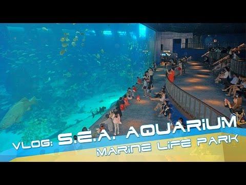 Sea Aquarium at Sentosa, Singapore - VIDEO REVIEW