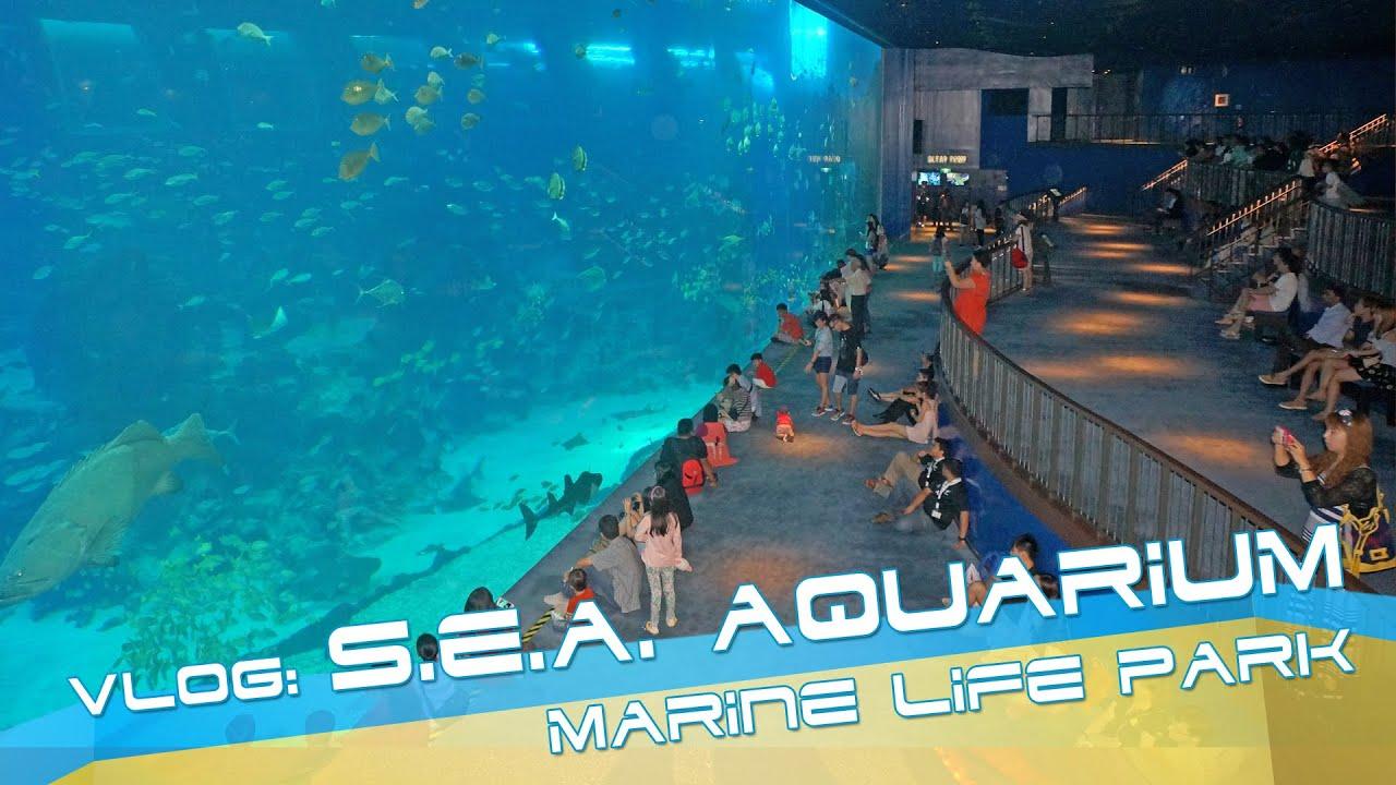 Fish aquarium in sentosa - Sea Aquarium At Sentosa Singapore Video Review