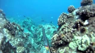 Fishing Tales - Big Island