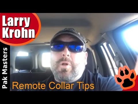 E Collar / Remote Collar tips and tricks for any dog