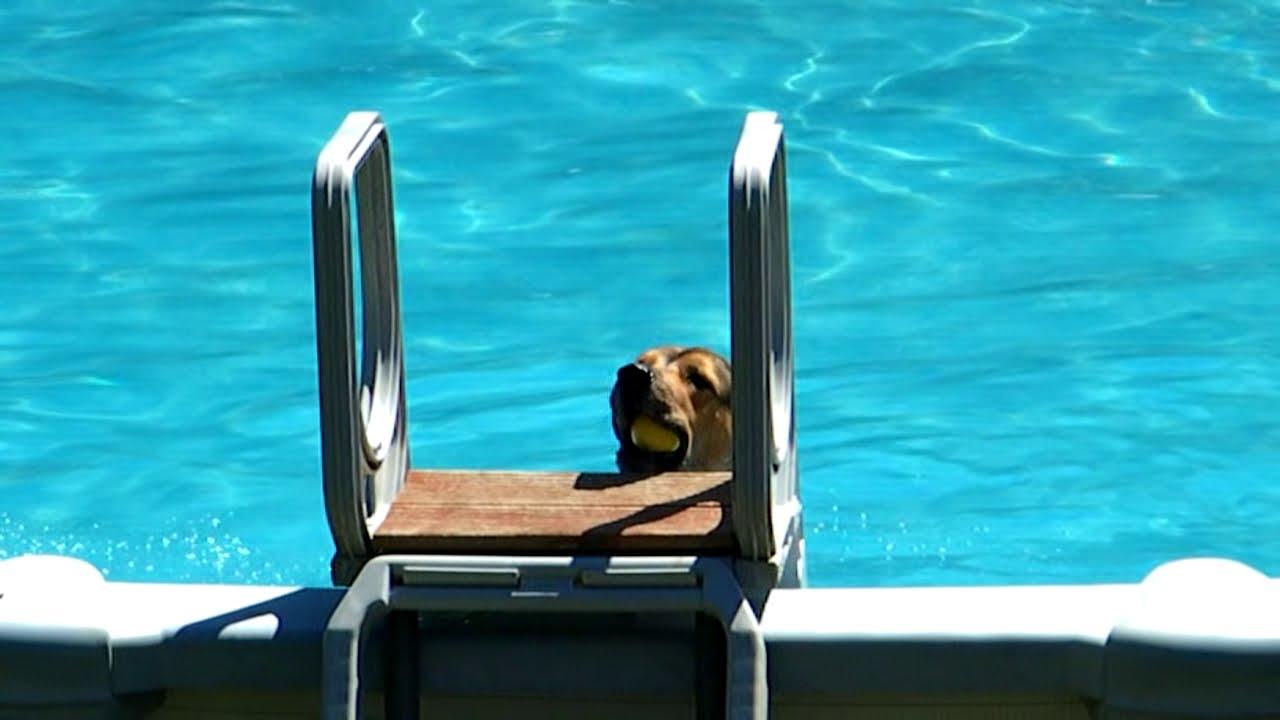 My dog swimming
