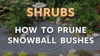 How to Prune Snowball Bushes