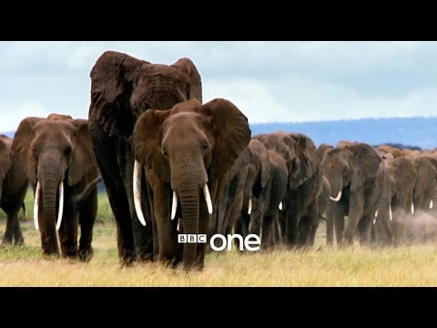 Nature's Epic Journeys: Trailer - BBC One