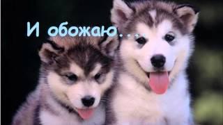 I love dogs/Я люблю собак.....