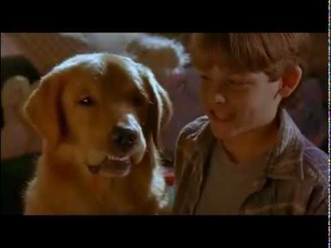 Kevin Zegers, Air Bud