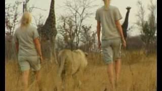 volunteering with animals