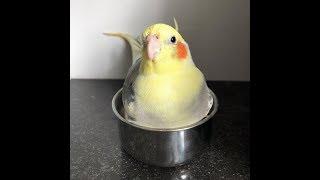 Самые Милые Попугаи В Мире. Подборка Приколов Про Птичек