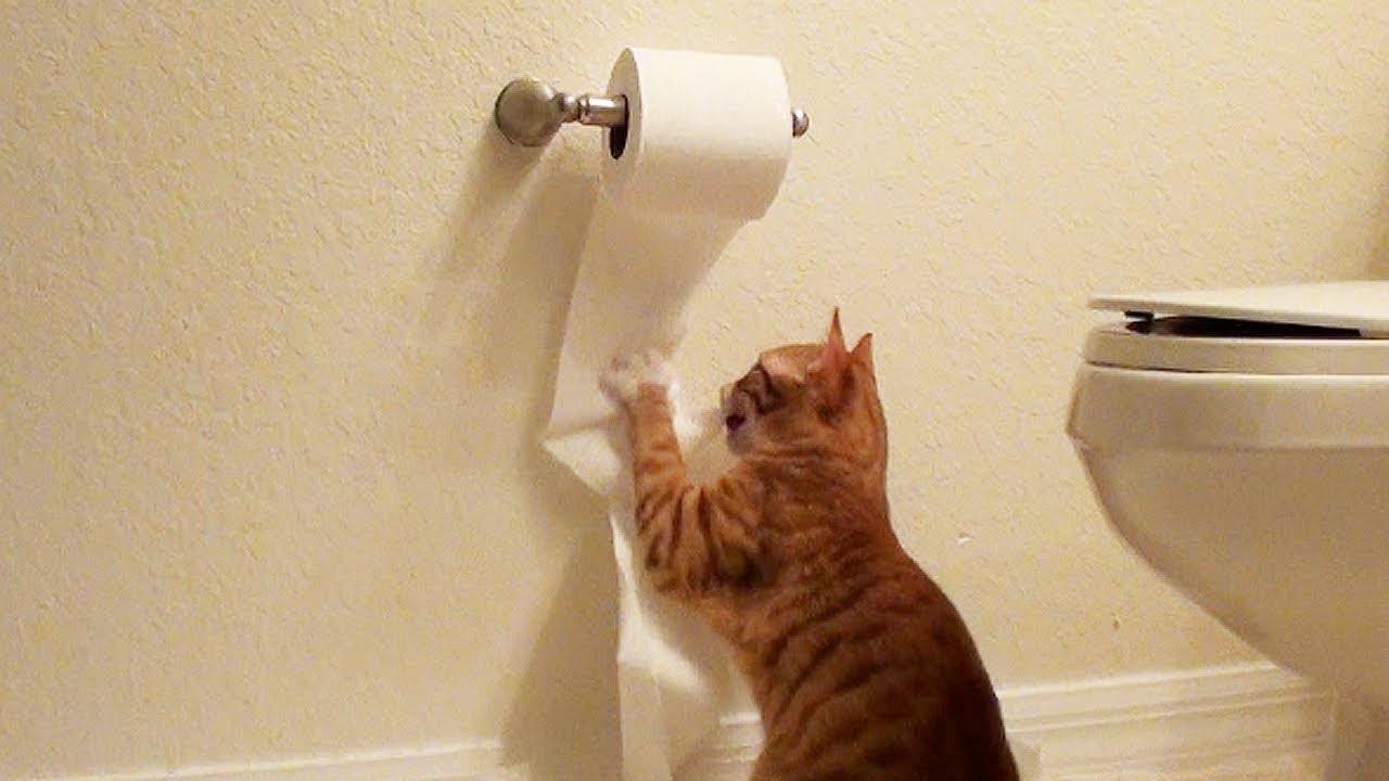 Cute Kitten Destroys Toilet Paper Doovi