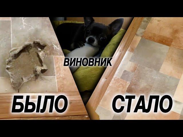 Как починить погрызанный собакой линолеум